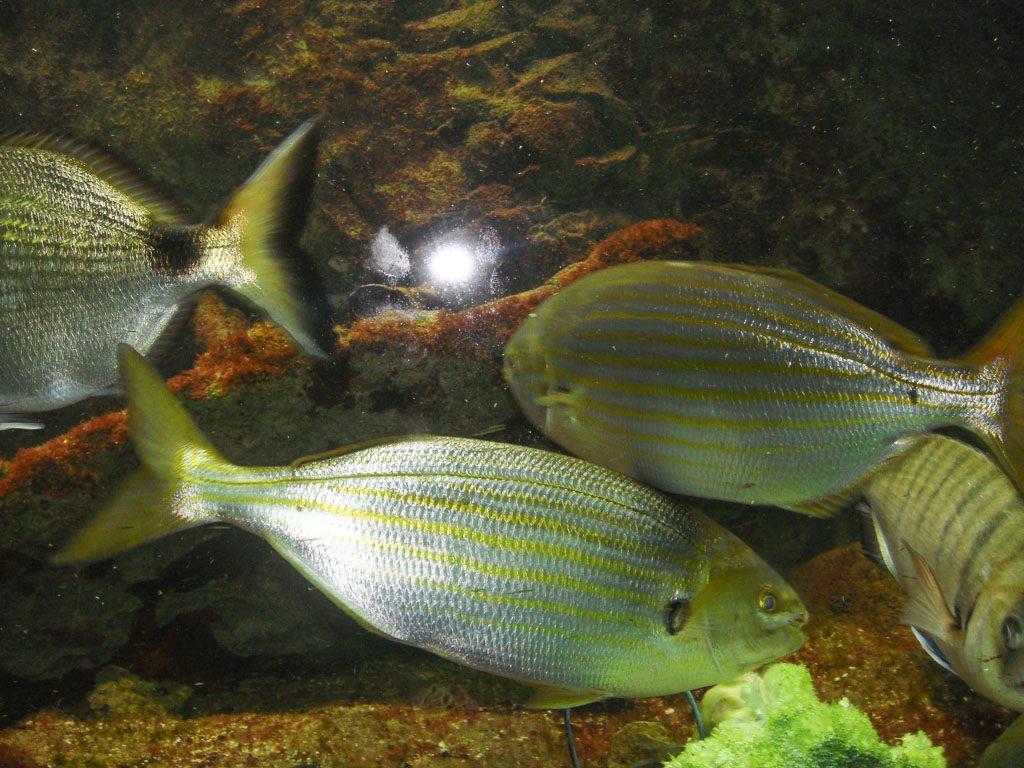 Fische hinter Glas fotografieren
