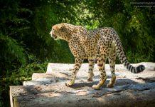 Fotografieren im Zoo & Tierpark