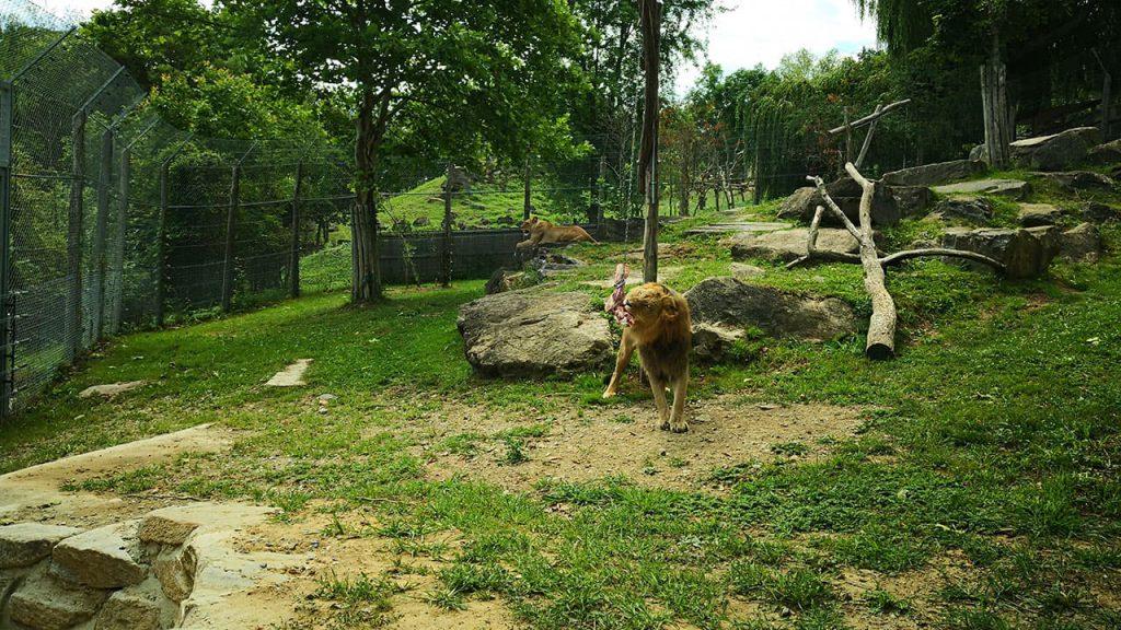 Smartphone Fotografie Zoo