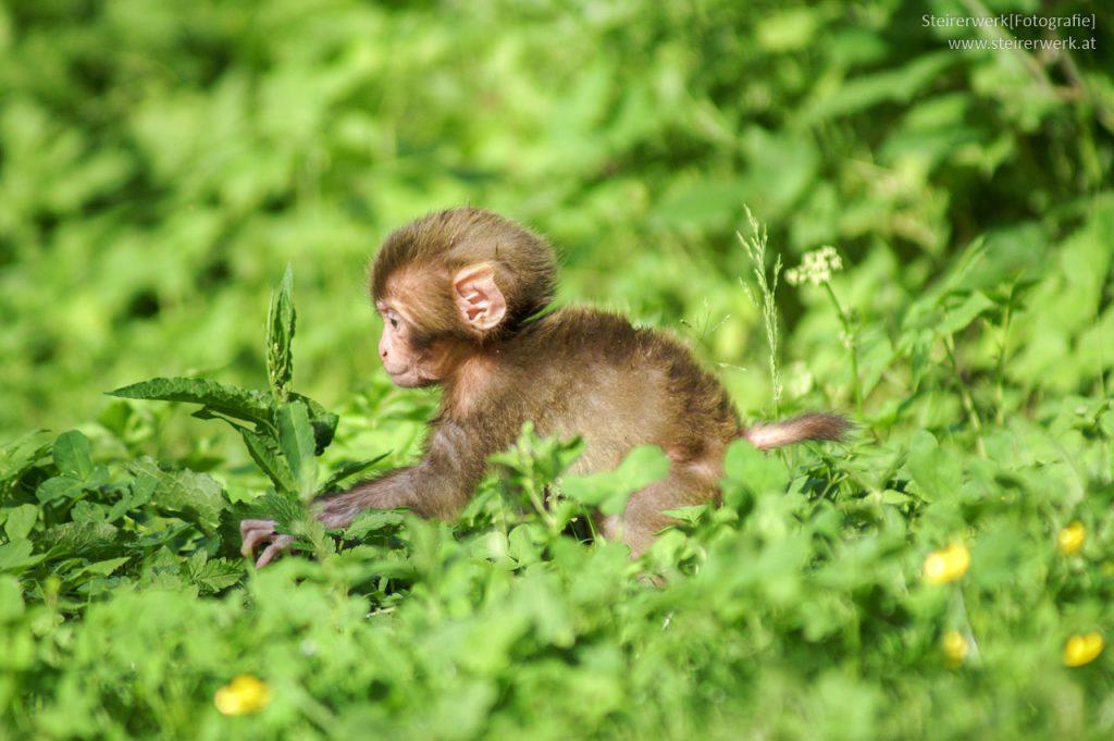 Tierfotografie Für Anfänger