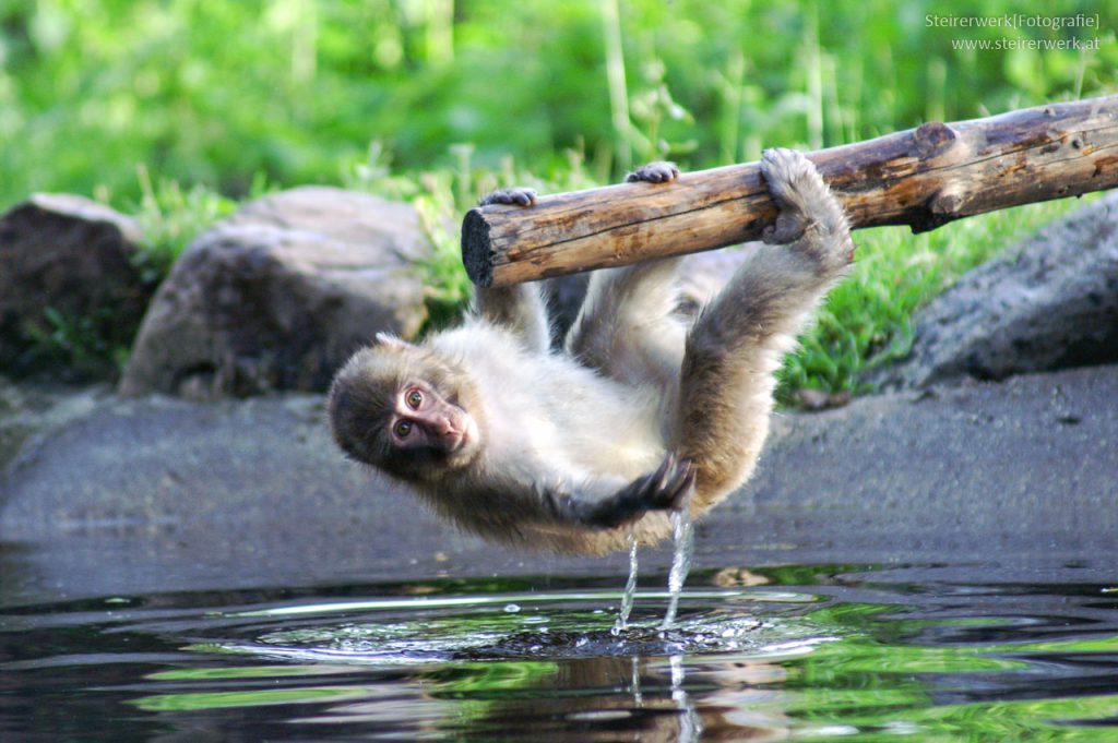 Verschlusszeit Tierfotografie Zoo