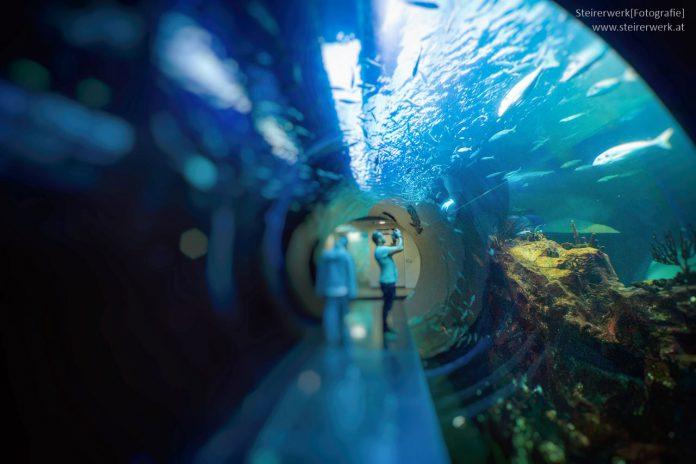 Haus des Meeres fotografieren