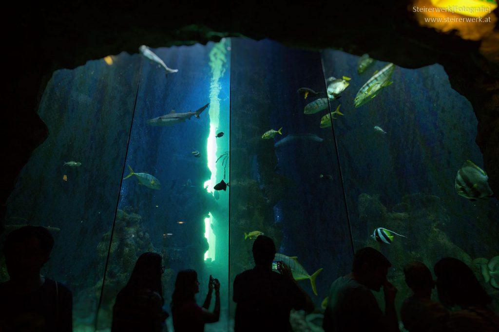 Haus des Meeres Haibecken
